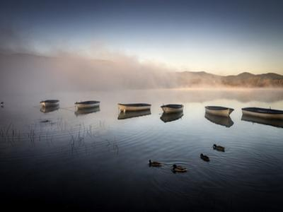 Mallard ducks (Anas platyrhynchos) and moored boats in calm waters in the early morning. by Tino Soriano
