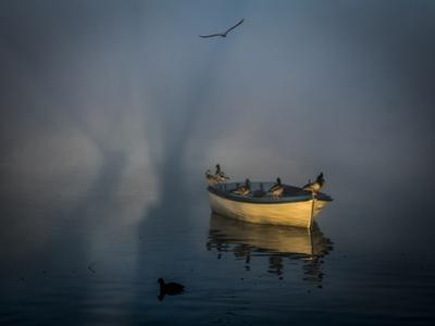 Mallard ducks (Anas platyrhynchos) perch on boat with a Herring gull (Larus michahellis). by Tino Soriano