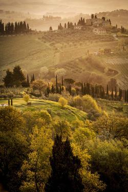Vineyards and Rolling Hills Near San Gimignano at Dawn by Tino Soriano