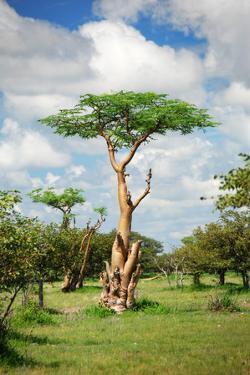 Fairy Forest in Etosha, Namibia by tish1