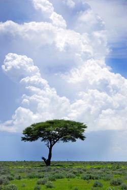 One Tree with Heavy Thunder Clouds in the Background by tish1