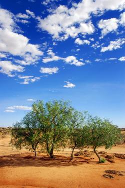 Trees in the Desert by tish1
