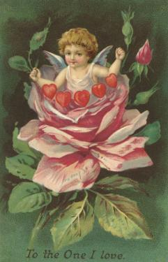 To the One I Love, Cupid in Rose