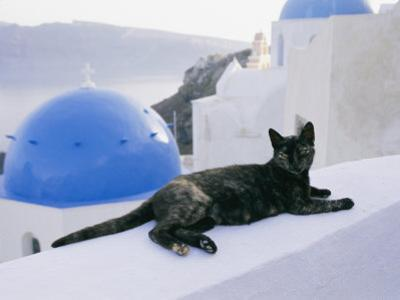 A Black Cat Sitting Atop a Low Wall