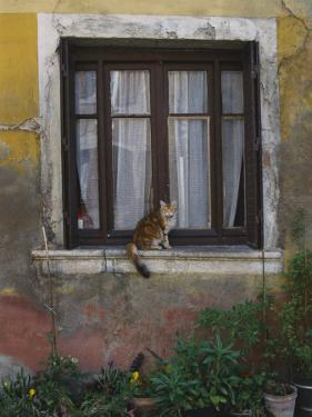A Cat Sitting on an Exterior Window Sill in Tournus by Todd Gipstein