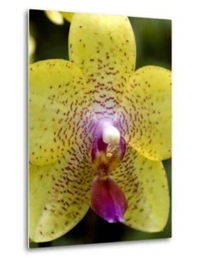 Close View of a Yellow Orchid Blossom, Groton, Connecticut by Todd Gipstein