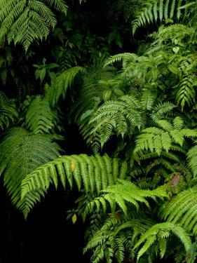 Close View of Lush Foliage in a Rain Forest by Todd Gipstein