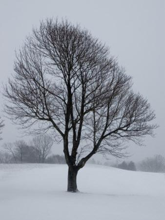 Lone Tree on a Golf Course Covered with Snow