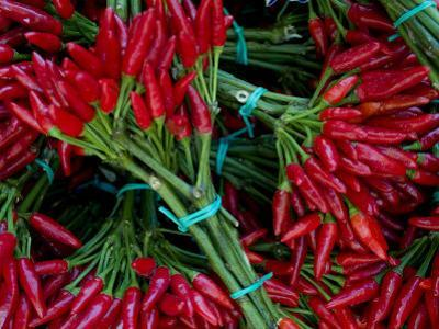 Red Chile Peppers in Bunches at the Rialto Market in Venice, Italy
