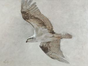 Searching Osprey by Todd Telander