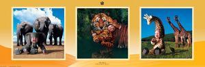 Imaginary Safari by Tom Arma