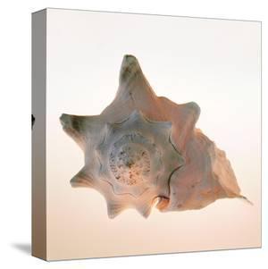 Conch by Tom Artin