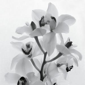 Orchid Spray I by Tom Artin