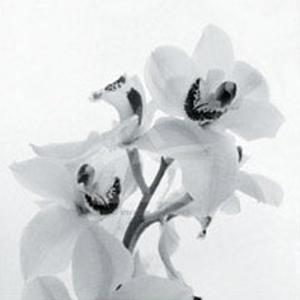 Orchid Spray II by Tom Artin