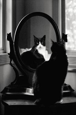 Reflection by Tom Artin