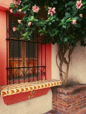 Flowering Hibiscus Near Pink Window, Puerto Vallarta, Mexico by Tom Haseltine