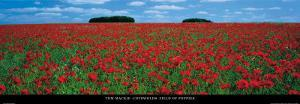 Cotswolds, Field of Poppies by Tom Mackie