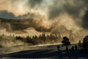 A Bison Cow Stands in the Distance Early Morning Fog and Steam from Old Faithful Geyser by Tom Murphy