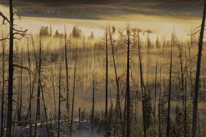 Landscape of a Burned Forest Covered in Fog by Tom Murphy