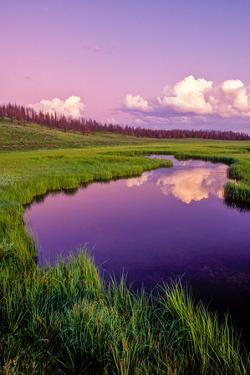 Reflections in Glenn Creek by Tom Murphy