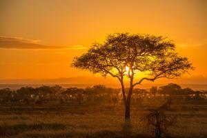 Sunset in Serengeti National Park by Tom Murphy