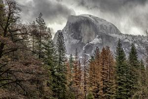 Half Dome View from Sentinel Bridge in Winter. Yosemite National Park, California. by Tom Norring