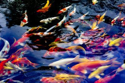 Koi fish pond. Hoi An. Vietnam. by Tom Norring