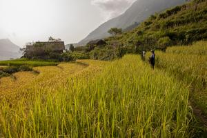 Walking Through the Terraced Rice Fields. Vietnam, Indochina by Tom Norring