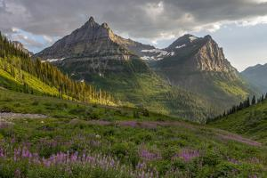 Wildflowers and Mountains. Glacier National Park, Montana, USA. by Tom Norring