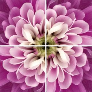 Close up of Pink Flower Quad by Tom Quartermaine