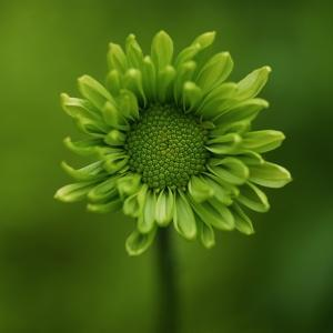 Green Flower on Green by Tom Quartermaine