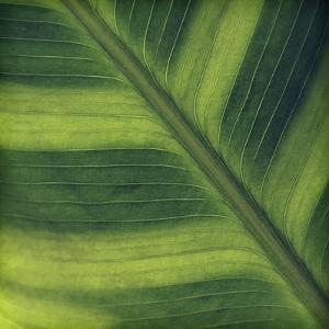 Green Leaf Close up 2 by Tom Quartermaine