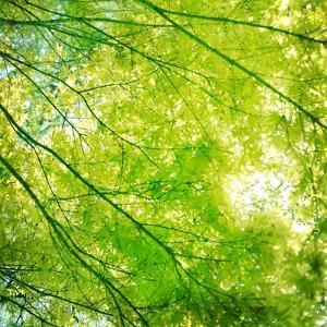 Green Leaves 001 by Tom Quartermaine