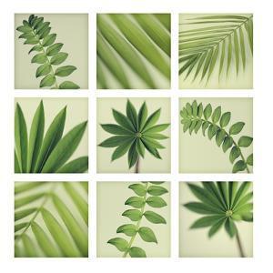 Grid of 9 Leaves by Tom Quartermaine