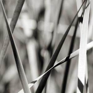 Leaves BW 02 by Tom Quartermaine