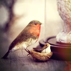 Little Antique Robin by Tom Quartermaine