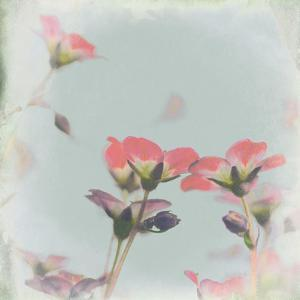 Little Pink Flowers on Blue by Tom Quartermaine