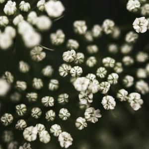 Little White Flowers by Tom Quartermaine