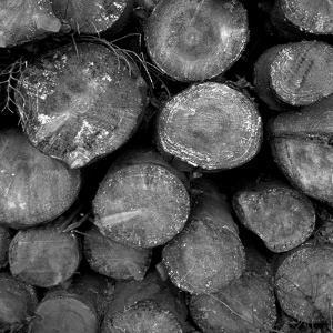 Logs BW by Tom Quartermaine