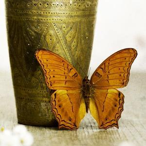 Orange Butterfly against Copper Vase by Tom Quartermaine
