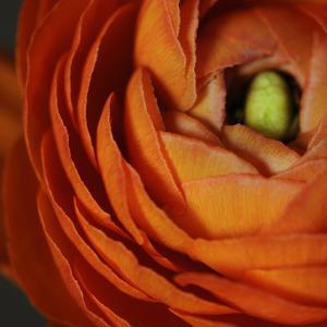 Orange Flower Close up by Tom Quartermaine