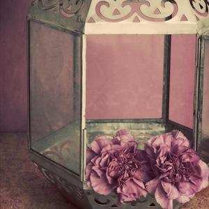 Pink Carnations in a Lantern by Tom Quartermaine
