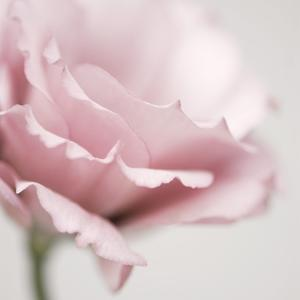 Pink Flower 01 by Tom Quartermaine