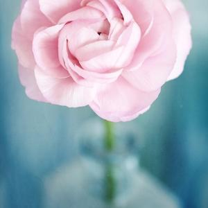 Pink Flower in Blue Bottle by Tom Quartermaine