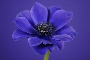 Purple Flower on Purple by Tom Quartermaine