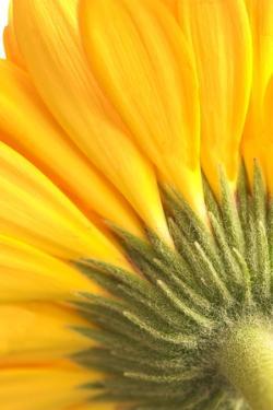 Reverse Of Yellow Flower by Tom Quartermaine