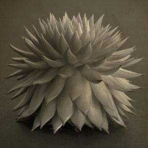 Sepia Cacti by Tom Quartermaine