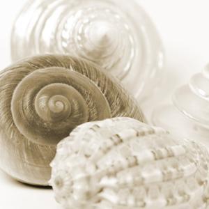 Sepia Shells by Tom Quartermaine
