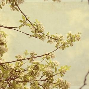 Spring Blossom on Tree 001 by Tom Quartermaine