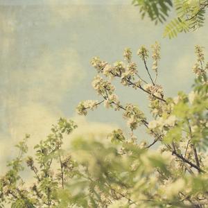 Spring Blossom on Tree 002 by Tom Quartermaine